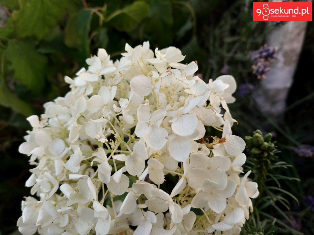 Zdjęcie wykonane Xiaomi Redmi Note 5 - 90sekund.pl / Michał Brożyński